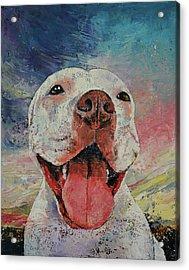 Pitbull Acrylic Print
