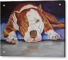 Pitbull Relaxing Acrylic Print by Laura Bolle