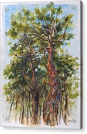 Pitch Pines, Cape Cod Acrylic Print by Peter Salwen
