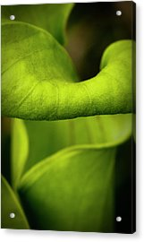 Pitcher Plant Abstract Acrylic Print