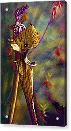Pitcher Plant Acrylic Print