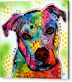 Pity Pitbull Acrylic Print by Dean Russo Art