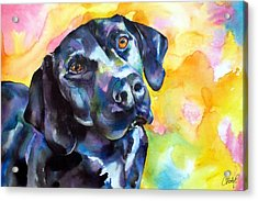Pixie Dog - Black Lab Acrylic Print