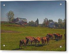 1014 - Plain Road Farm And Cows I Acrylic Print