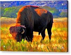 Plains Buffalo Acrylic Print by JohnD Smith