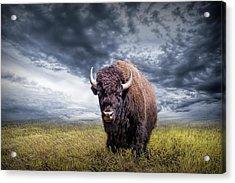 Plains Buffalo On The Prairie Acrylic Print