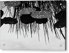 Plant Abstract Acrylic Print by Carolyn Dalessandro