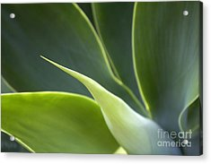 Plant Abstract Acrylic Print