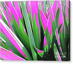 Acrylic Print featuring the photograph Plant Burst - Pink by Rebecca Harman