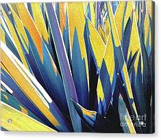 Plant Burst - Yellow Acrylic Print
