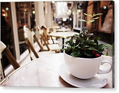 Plant In A Cup In A Cafe Acrylic Print