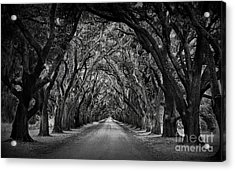 Plantation Oak Alley Acrylic Print by Perry Webster