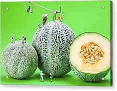Planting Cantaloupe Melons Little People On Food Acrylic Print by Paul Ge