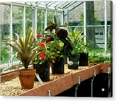 Plants In Greenhouse Acrylic Print by Susan Savad