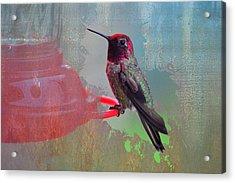 Plate 031 - Hummingbird Grunge Series Acrylic Print