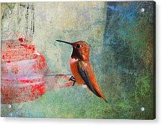 Plate 048 - Hummingbird Grunge Series Acrylic Print