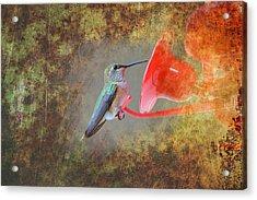 Plate 153 - Hummingbird Grunge Series Acrylic Print