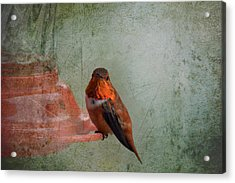 Plate 164 - Hummingbird Grunge Series Acrylic Print
