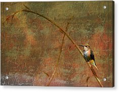 Plate 225 - Hummingbird Grunge Series Acrylic Print
