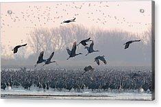 Platte River Morn Acrylic Print