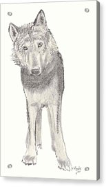 Play With Me Acrylic Print by Mendy Pedersen