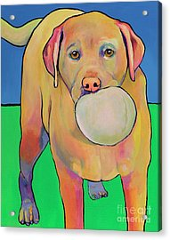 Play With Me Acrylic Print by Pat Saunders-White