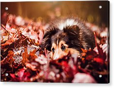 Playful Autumn Dog Acrylic Print