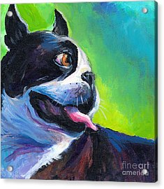 Playful Boston Terrier Acrylic Print by Svetlana Novikova