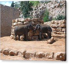 Playful Elephants Acrylic Print by Susan Heller