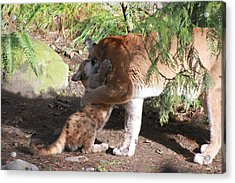 Acrylic Print featuring the photograph Playful Hugs by Laddie Halupa