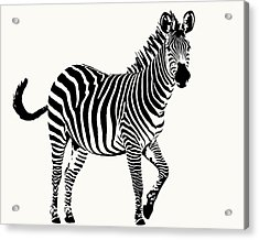 Playful Zebra Full Figure Acrylic Print