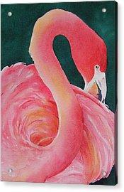 Playing Coy Acrylic Print by Judy Mercer