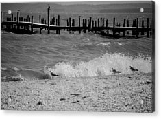 Playing In The Waves Acrylic Print by Jennifer Lauren