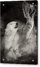 Acrylic Print featuring the photograph Playtime by Jessica Brawley