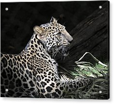 Playtime Acrylic Print by Keith Lovejoy
