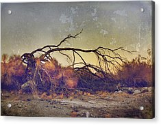 Pleading For Life Acrylic Print by Laurie Search