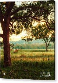 Pleasant Morning Acrylic Print by Tamyra Ayles