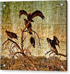 Acrylic Print featuring the photograph Pleasanton Vultures by Steve Siri