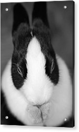 Please Be Carrots Acrylic Print by Fraser Davidson