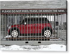 Please Do Not Feed Tease Or Annoy The Mini Acrylic Print