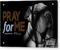 Please Pray For Me Acrylic Print