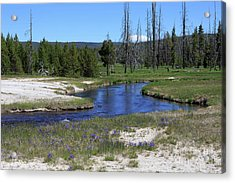 Pleated Gentians Beside Iron Creek In Black Sand Basin Acrylic Print by Louise Heusinkveld
