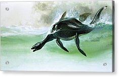 Plesiosaurus Acrylic Print by William Francis Phillipps