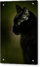 Plotting The Next Move Acrylic Print