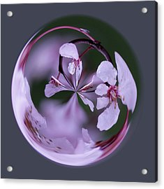 Plum Tree Orb Acrylic Print by Bill Barber