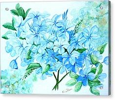 Plumbago Acrylic Print by Karin  Dawn Kelshall- Best