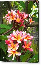 Plumeria - Pink And Orange Acrylic Print by Kerri Ligatich