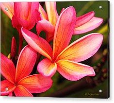Plumeria - Pretty Pink Acrylic Print
