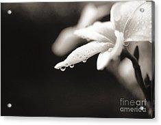 Plumeria Close-up Acrylic Print by Reggie David - Printscapes