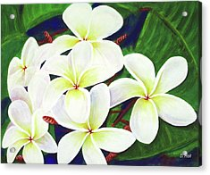 Plumeria Flower #289 Acrylic Print by Donald k Hall